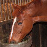Fütterung Pferd