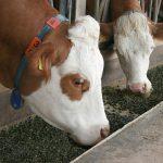 gentechnikfreies Kraftfutter von der Qualitätstrocknung Nordbayern eG