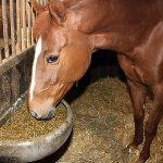 Unser Premium-Pferdefutter erhalten Sie bei der WB Qualitätsfutterwerk GmbH
