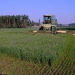 Ernte durch die Qualitätstrocknung Nordbayern eG bei Vertragsanbau