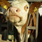 Qualitätstrocknung Nordbayern eG - Mischfutter