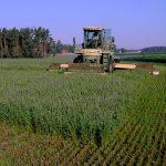Ernte der Luzerne - Qualitätstrocknung Nordbayern eG