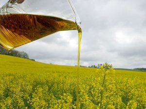 landwirtschaftlicher Bereich Rapsöl